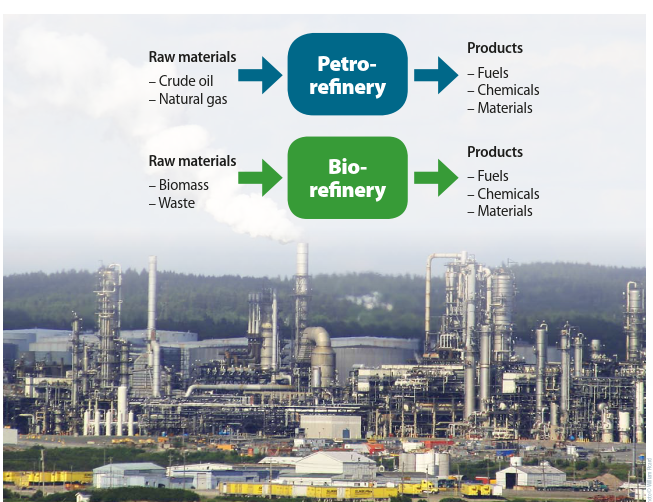 Similarity to an oil-based refinery a biorefinery can produce multiple products from biomass